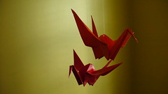 sun birds: outtakes