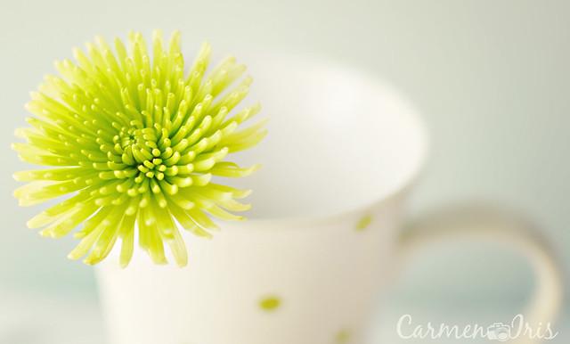 cup of joy I  {2/52}
