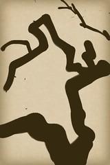 Glimpses of a Busy Week: 8:30 AM Winter Tree 2011.01.13 (Julia L. Kay) Tags: sanfrancisco winter blackandwhite bw woman white black tree art nature silhouette mobile female digital grey sketch san francisco artist arte julia kunst kay daily brush dessin peinture zen 365 everyday dibujo touchscreen artista mda fingerpaint artiste iphone knstler iart isketch mobileart idraw ipodtouch fingerpainter iphoneart juliakay julialkay zenbrush iamda mobiledigitalart zenbrushapp zenbrushapponly