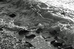 la mer en noir et blanc  (8) (Jean-marc17340) Tags: mer france nature landscape eau noiretblanc promenade vagues lamer ocan littoral chatelaillon charentemaritime angoulins lesboucholeurs