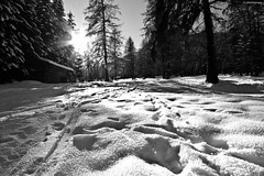 Into the Wild (Alberto Grego Photography ) Tags: winter light sun snow ice montagne canon casa sigma case sento neve sole inverno natale montagna moso freddo montain trentino 1224 lightroom ghiaccio eos500d