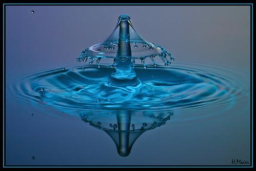 Bluehut