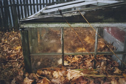 the cold frame