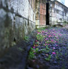 The wind has fallen (zendx) Tags: street flower 6x6 fuji kowa kowasix 85mmf28 pn160nc
