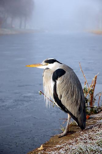 Canal Heron II