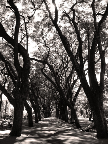 Tipa Trees in Parque Lezama, San Telmo, Buenos Aires, Argentina by katiemetz, on Flickr