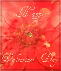 Happy Valentines Day (creationsbycathie) Tags: flowers art nature floral canon garden photography flora northwest valentines pdx portlandoregon picnik dahlias valentinesday twitter pdxart pinkdahlias northwestart oregonphotography northwestphotography