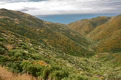 Koromiko photos - Te Kopahou Reserve - Wellington New Zealand (Steve Attwood) Tags: newzealand canon landscape wellington hebe koromiko hebestricta