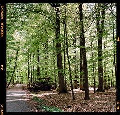 The way through the forest (Fabrizio Zago - Photography & media) Tags: trees tree verde green 120 6x6 film nature leaves foglie alberi analog forest mediumformat leaf europa europe natural kodak border natur natura 120film hasselblad squareformat scanned nrw foglia analogue grn blatt wald 160vc portra baum kodakportra160vc analogica borken filmscan bosco foresta 500cm portra160vc analogical pellicola hasselblad500cm northrhinewestphalia scannedfromfilm analogico scannedfromnegative landkreis filmborder scansione bumen medioformato filmscanned digitizedfilm 120border fabriziozago lucemozioni pellicola120 bltter