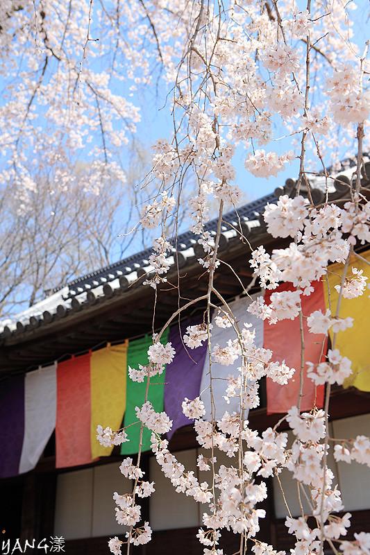 京都醍醐寺part1