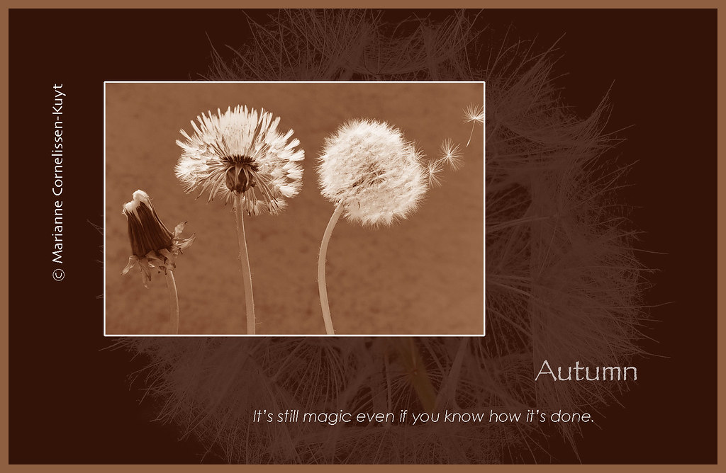 Citaten Herfst Free : The worlds best photos of dandelion and quote flickr hive mind