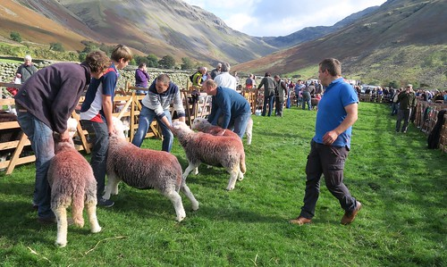 Wasdale Shepherds Meet 8/10/16