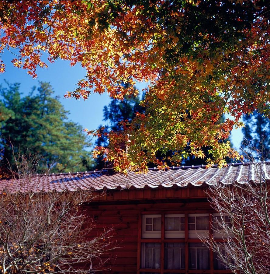 福壽山 -- 楓紅 底片版