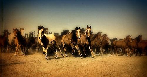 Vintage Mustangs
