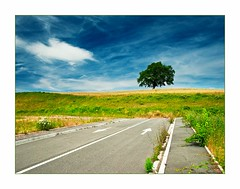 Tree in Spain (Botond Horvth) Tags: world road travel blue summer sky color tree green nature beauty field grass clouds landscape photo nice spain nikon europe alone nobody nikkor fa 2010 cokin tjkp d90 botond horvth spanyolorszg 1685mm