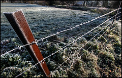 sont bien au chaud... (_wysiwyg_) Tags: winter field fence countryside frost hiver barbedwire campagne champ givre grillage fildeferbarbelé