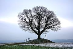 Friedenseiche (FluxGrafix) Tags: tree canon photography fotografie baum friedenseiche flickrchallengegroup