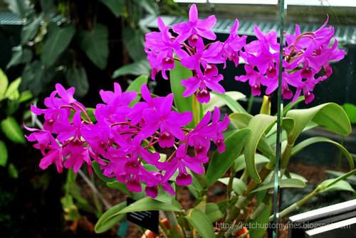 botanical-garden-(30)