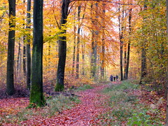 Ode To Autumn... (invictus2 (away)) Tags: autumn red orange brown green colors yellow gold woods path walk memories nostalgia trail longingagainforautumn