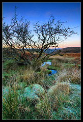 Ecology (RattyBoots) Tags: mist tree water ecology pool grass canon devon 7d bracken dartmoor venford canon1022 dartmeet combstone