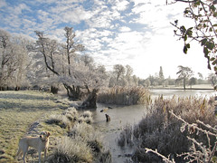 Frozen lake (Green_blade) Tags: winter dog ice landscape frost hoarfrost labradoodle winterwonderland frozenlake wimpole