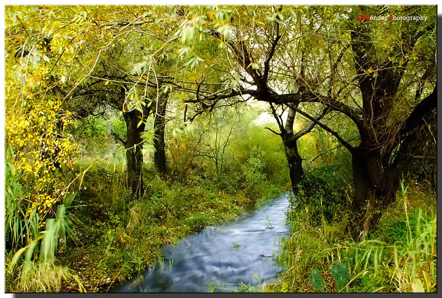 El bosque de otoño