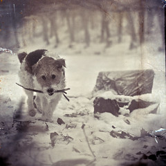 (~Liliana) Tags: winter dog snow vintage maja retro squared textured gdask oliwa