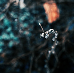 [228/365] Beginnings of hope (ng.kelven) Tags: water droplets 365 35mmf14 canon5dmarkii