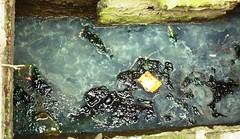 giftige Brühe I (Luiz Edvardo) Tags: indonesia java canal dirty dirt jakarta gift pollution kanal poison sewer müll indonesien umwelt kanalisation abfluss abwasser giftbrühe schmutzig umweltverschmutzung umweltzerstörung giftmüll abflus westjakarta