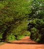 Slowing Down in the Homestretch (osvaldoeaf) Tags: road trip travel trees brazil sky nature grass speed fence landscape drive strada path estrada journey freeway cerrado goiânia goiás digitalcameraclub