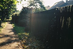 morning sunshine dust (planetails ) Tags: nature grass sunshine fence blurry path analogcamera nikonf301 fujic200