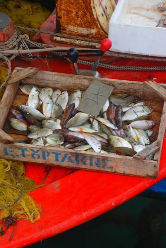 fish - Volos