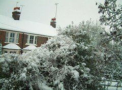 400 (in.elegance) Tags: trees houses winter white snow rooftops