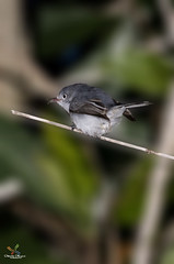 Bird (Abdullah Alhuzimi - www.huzimi.com) Tags: park bird chocolate swiss olympus national everglades abu zuiko swd faisal e5 abdullah 50200 alhuzimi