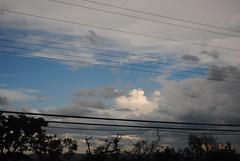 Reflections of a cloudy skyline. (marina_carvalho) Tags: planta skyline cu prdosol rua nuvem rvore iupi cunublado elefantecolorido