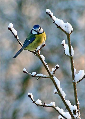 Douceur hivernale ! - Winter's gentleness !