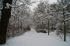 "Snow in Den Haag ""The Hague"" (Jeneverywhere) Tags: trees winter holland forest denhaag thehague netherlans winterdenhaag winternetherlands"