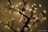 Natal 2010 (Stefan Lambauer) Tags: christmas light tree brasil natal br sãopaulo led santos árvore 2010 stefanlambauer