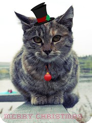 cat christmas kedi katze noel (AshleyDanieL) Tags: christmas cat bell katze merry jingle kedi tekir gksupark