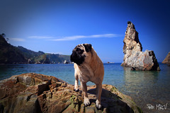 Trasgu 1 (Patricia Cuervo) Tags: dog canon pug asturias playa perro silencio carlino 400d gavieru