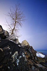 Solitary (*CityPines*) Tags: toronto tree stars rocks zen nightsky solitary ashbridgesbay sigma1020mm