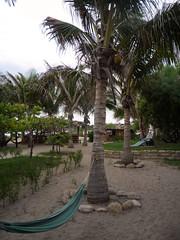 9264 (timrothonphotography) Tags: trees peru southamerica sand rboles stones seat arena hammocks coconuts americas mancora cocos piedras coconuttrees asiento hamacas amricadelsur piuraregion lagunasurfcamp rbolesdecoco