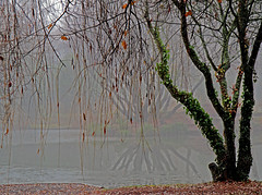 In the mist! (Susan SRS) Tags: winter england mist reflection devon dawlish cofton img8895 flickraward