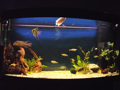 fish aquarium vision tropical planted juwel