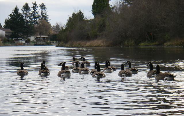 The New Economy: Goose Herding