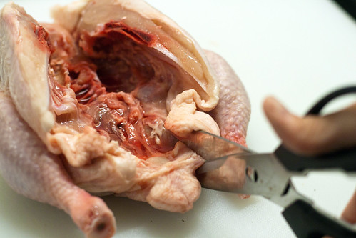 cut backbone