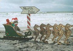 Sock Monkey Santa (monkeymoments) Tags: santa beach sand waves sockmonkeys monkeys sockmonkey sleigh seahorses northpole funnysanta uniquesanta