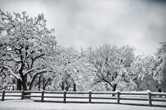 The Fence (d-day buff) Tags: winter white snow cold texture texas overlay unusual blizzard
