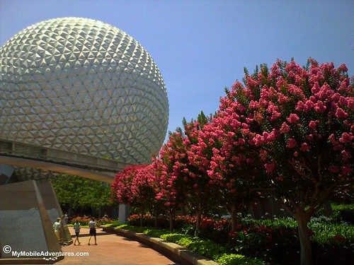 Crepe Myrtle at EPCOT