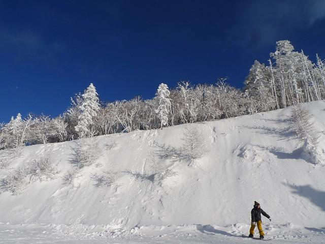 山上的樹冰